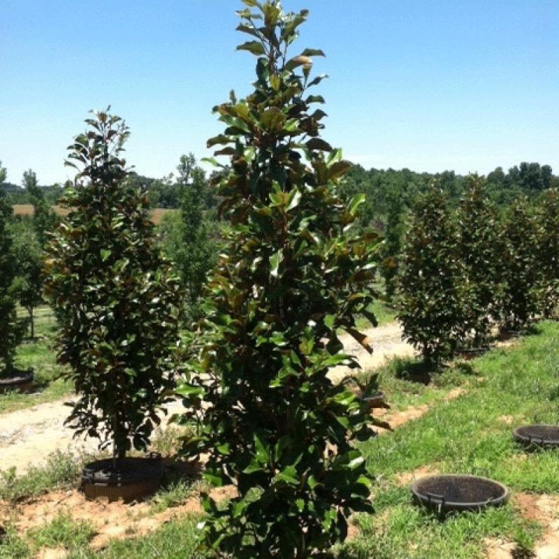 Product Categories Magnolia