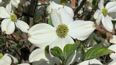 homepg_bloom1_wide