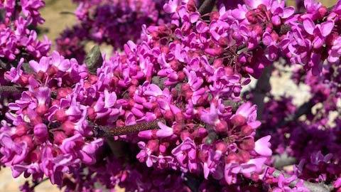 homepg_bloom3_wide