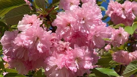 homepg_bloom4_wide